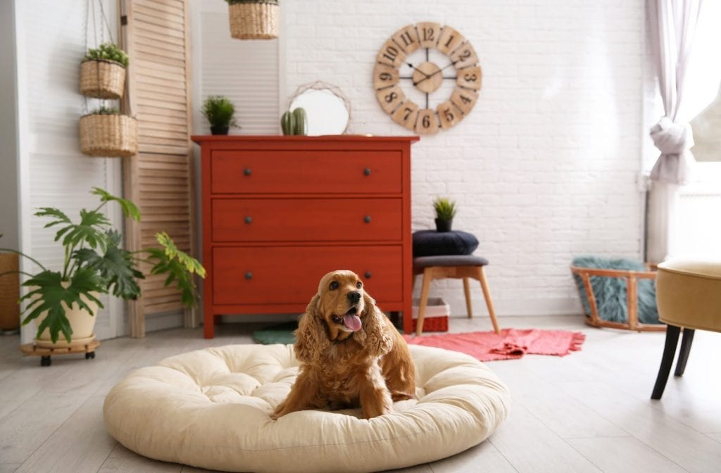 A dog laying comfortably on a dog bed in a living room